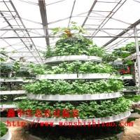 支持定做 蔬菜水培管道 立柱式无土栽培设备 农业温室大棚