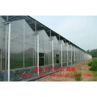南方阳光板温室建造 单斜面阳光板温室 简易阳光板温室大棚批发