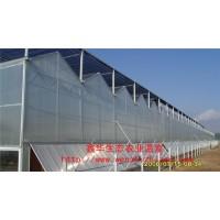 文洛式阳光板温室 庭院阳光板温室 环保薄膜温室 青州鑫华定制